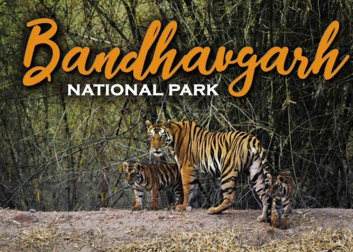 Bandhavgarh Tour Packages