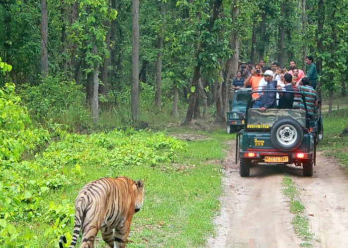 Bandipur Wild Life Tour Package