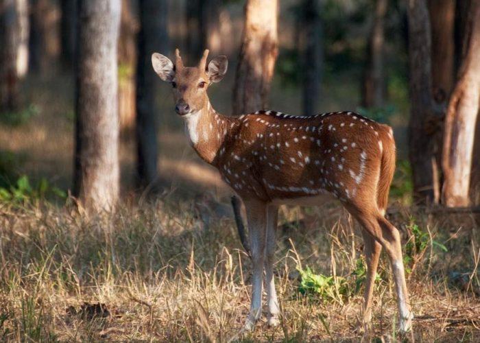 Madhya Pradesh Tour Package Khajuraho – Panna National Park