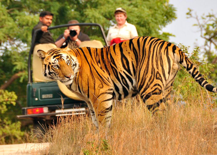 Nainital Jim Corbett Tour Package